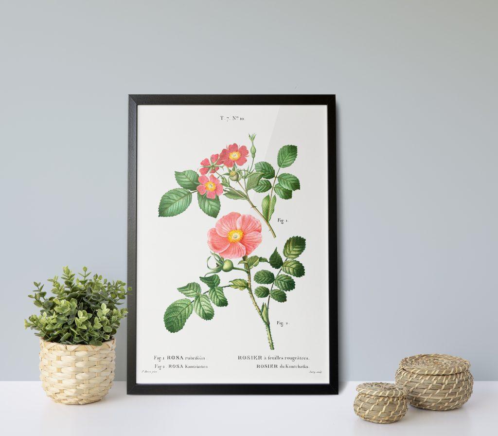 rysunek kwiatów plakat rycina