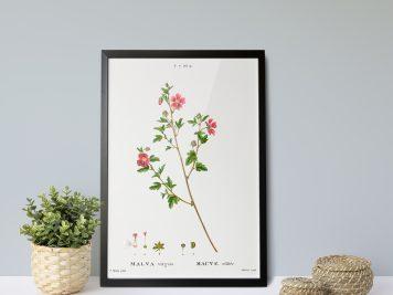 rysunek kwiatów rycina plakat