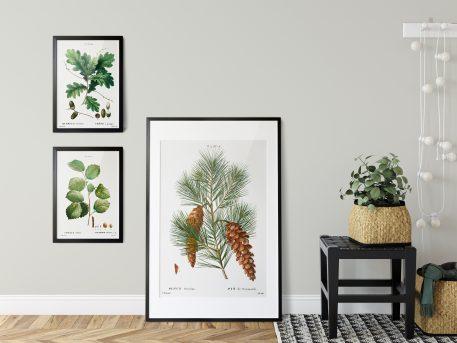 rycina rysunek botaniczny