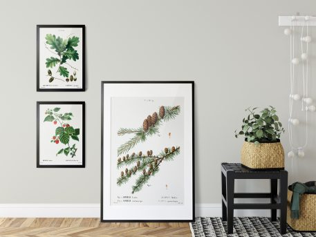 rysunek rycina botaniczna