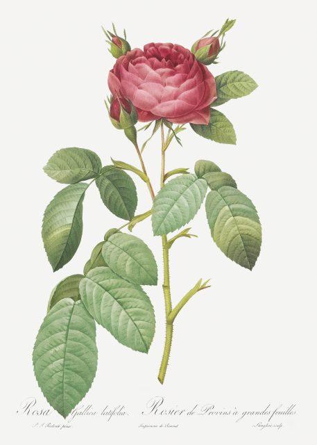 róża róże kwiaty prezent na imieniny urodziny prezent