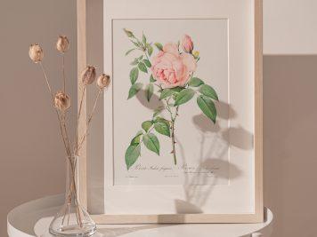 róża róże rysunek vintage kwiaty prezent urodziny imieniny