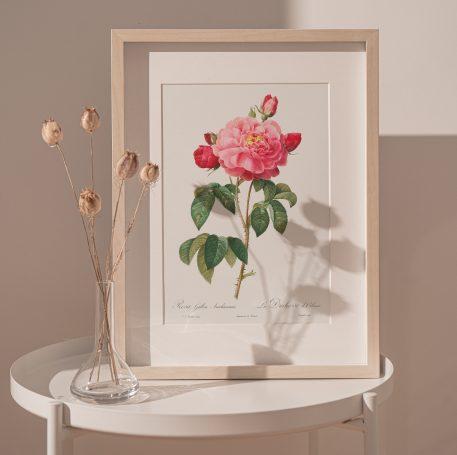 róża róże kwiaty prezent urodziny imieniny