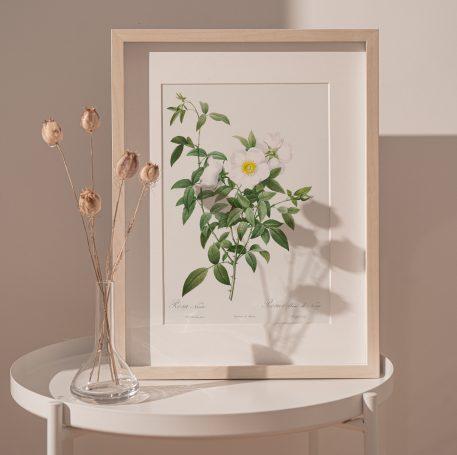 róża róże rysunek kwiaty prezent urodziny imieniny