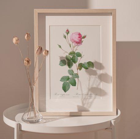 róża róże kwiaty prezent na imieniny