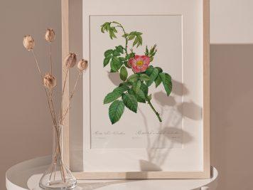róża vintage róże kwiaty prezent urodziny imieniny